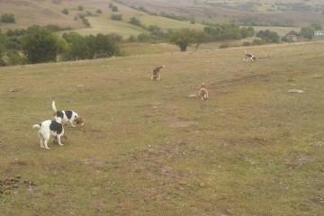 Borrador Decreto que desarrolla la Ley de Caza de Especies en Cantabria