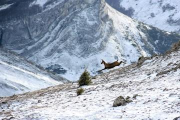 Orden anual de caza y al Plan técnico de la Reserva Regional de Caza Saja